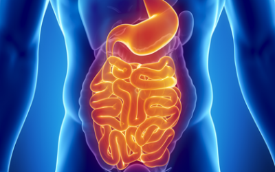 Changes in gut and Parkinson's risk