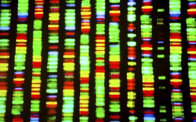 Study uncovers role of PD-related gene