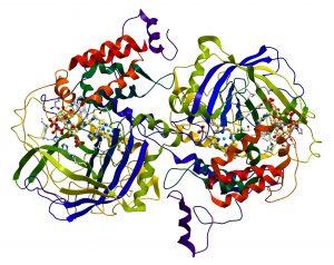 Enzyme Catalase-Parkinson's Movement